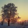 Zapadající slunce se stromem
